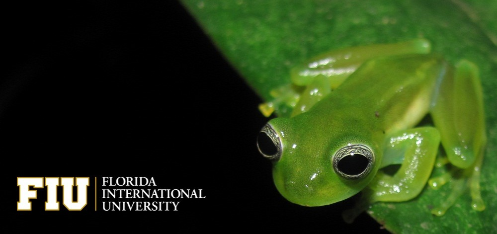 an analysis of the frog a reptile Frog call quiz - a resource for learning frog call  population analysis software - a  partners in amphibian and reptile.